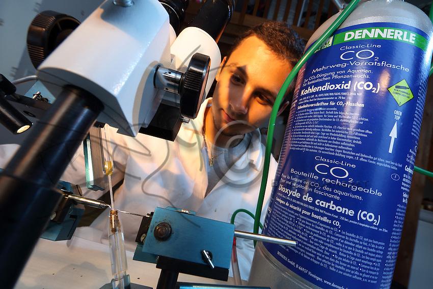 Castres – Alain Mérit, young selector of queens prepares the artificial insemination.///Castres – Alain Mérit, jeune sélectionneur de reines prépare une insémination artificielle.