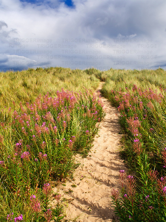 Sandy Path through the Dunes at Druridge Bay near Amble by the Sea on the Northumberland Coast England