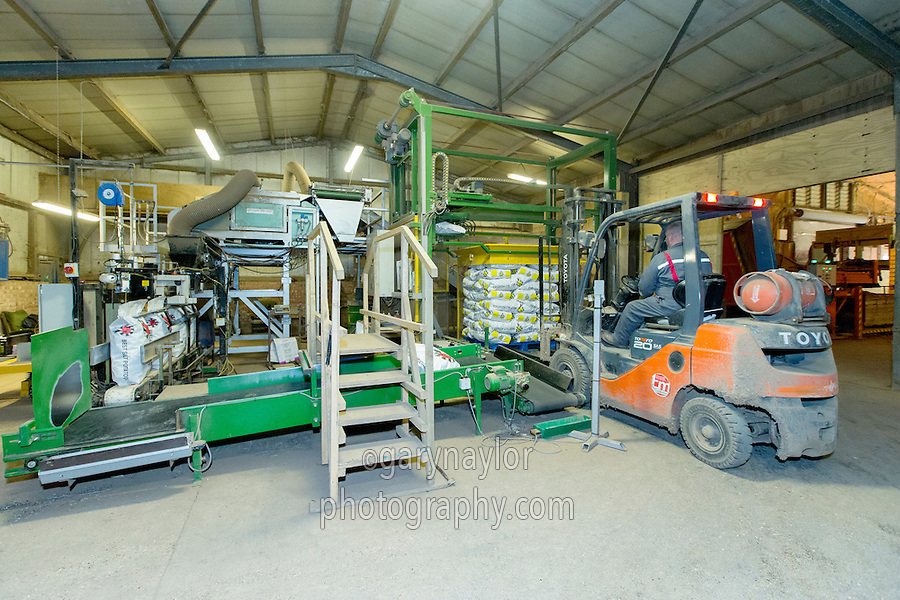 Grading and bagging potatoes - Lincolnshire, February