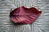 Autumn Leaf<br /> <br /> Stock Photo by Paddy Bergin