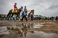 LOUISVILLE, KY - MAY 04: Classic Empire with Matin Rivera walks to the track as fans look on at Churchill Downs on May 04, 2017 in Louisville, Kentucky. (Photo by Alex Evers/Eclipse Sportswire/Getty Images)