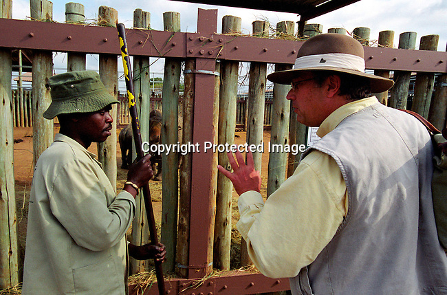 diwlauc00002 .Magnus S. Karlberg, a buyer for a Swedish Zoo talking to Rhino handler about the condition of th animals during the yearly wildlife auction on June 21, 2002 by the Ezemvelo KZN wildlife at Hluhluwe-iMfolozi Park in Natal, South Africa. Mr. Karlberg bought two rhinos for 410.000 Rands. Hluhluwe has the most successful rhino program in the world, and was started about one hundred years ago when there were less than a hundred rhinos left on the entire African continent. Around 1960, when the rhino population had recovered, it became necessary to control the amount of animals. They started to move animals to other areas and sell it to parks and game lodges all over the world..The auction took in almost fifteen million rands, which will be used for wildlife conservation. .©Per-Anders Pettersson/iAfrika Photos.
