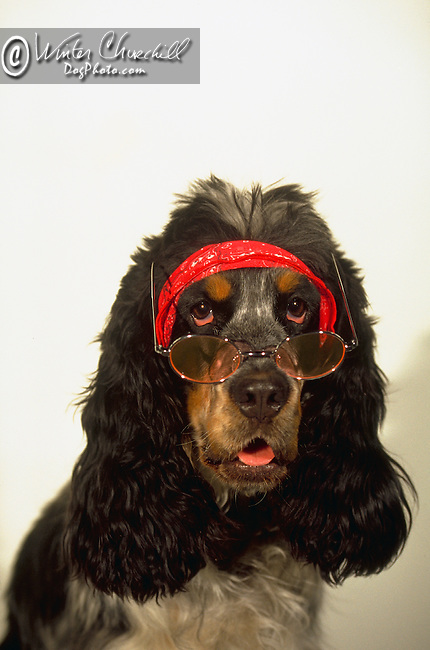 If Tommy Chong was a dog... Shopping cart has 3 Tabs:<br /> <br /> 1) Rights-Managed downloads for Commercial Use<br /> <br /> 2) Print sizes from wallet to 20x30<br /> <br /> 3) Merchandise items like T-shirts and refrigerator magnets