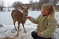 Kind, Mädchen füttert zahmes Reh im Winter, Capreolus capreolus, Portrait Weibchen, Ricke, roe deer