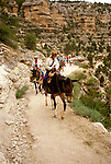 AZ, Arizona, Mule rides, no model release, at Grand Canyon National Park, Arizona.Photo Copyright: Lee Foster, lee@fostertravel.com, www.fostertravel.com, (510) 549-2202.azgran213