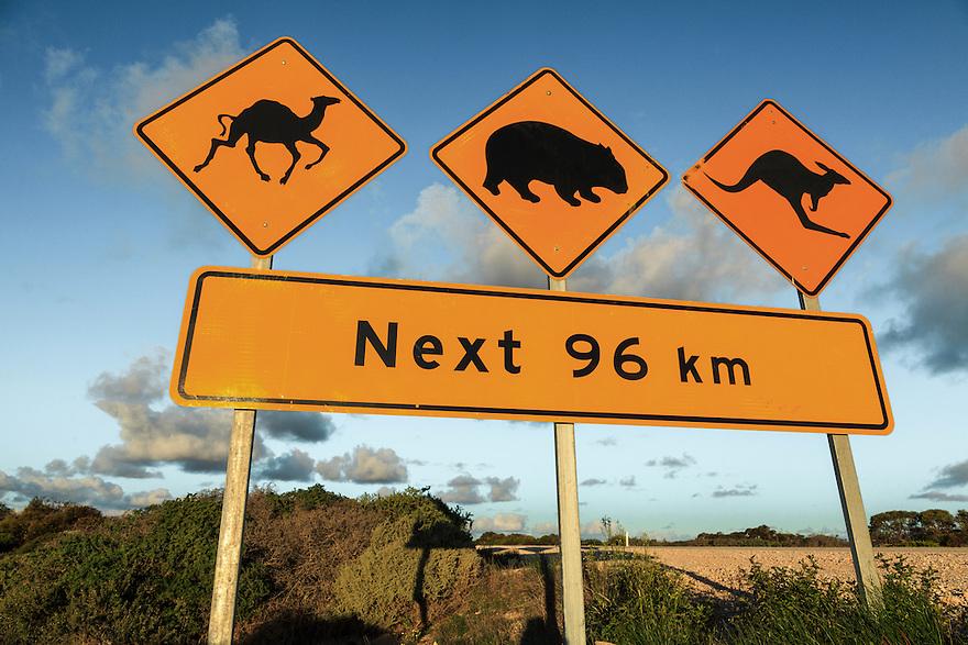 Camel, wombat and kangaroo warning sign. Nullarbor Plain. South Australia.