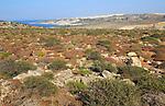 Mediterranean garrigue vegetation, Marfa peninsula, Malta view to Mellieha Bay