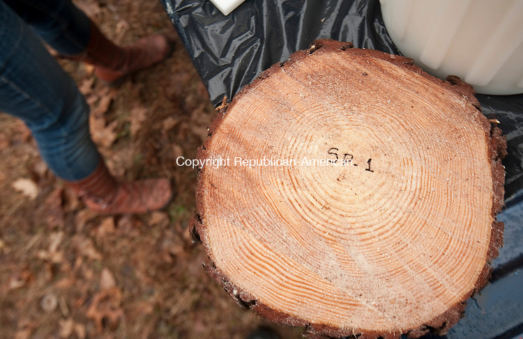 HAMDEN,  CT,  CT-040715JS05- A sample cut from a Scottish Pine Tree that was infested with the Southern Pine Beetle is ready to be shipped to the Connecticut Agricultural Experiment Station, Tuesday inside the Naugatuck State Forest in Hamden. <br /> Jim Shannon Republican-American