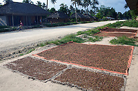 PEMBA, TANZANIA - DECEMBER 6: Cloves are drying on the ground in village on December 6, 2010 on Pemba, Tanzania. Pemba is known for its many spices. (Photo by: Per-Anders Pettersson)