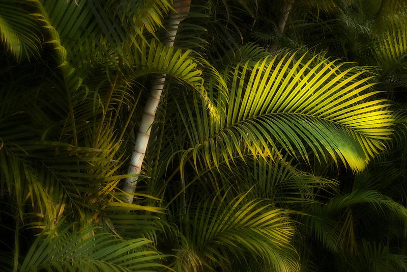 Tropical foliage. Punta Mita, Mexico