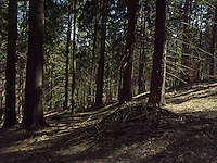 FOREST_LOCATION_90212