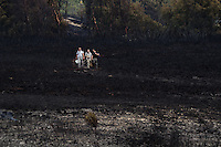 Conservation volunteers on the heath collecting reptiles in the wake of a fire. Upton Heath, Dorset, UK.
