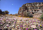 Wildflowers at Red Rock Canyon State Park