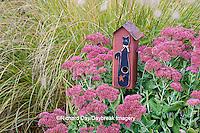 63821-22308 Birdhouse in garden with Autumn Joy Stonecrop (Sedum spectabile 'Autumn Joy') and Fountain Grass (Pennisetum setaceum) Marion Co., IL