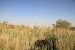 Ein Zach near Hatzeva