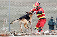 "An UME's member play with a rescue dog German Shepherd during Exercise ""GAMMA PALAZUELOS 2013"" of theMIlitary Unit of Emergency (UME).March 11 ,2013. (ALTERPHOTOS/Acero) /NortePhoto"