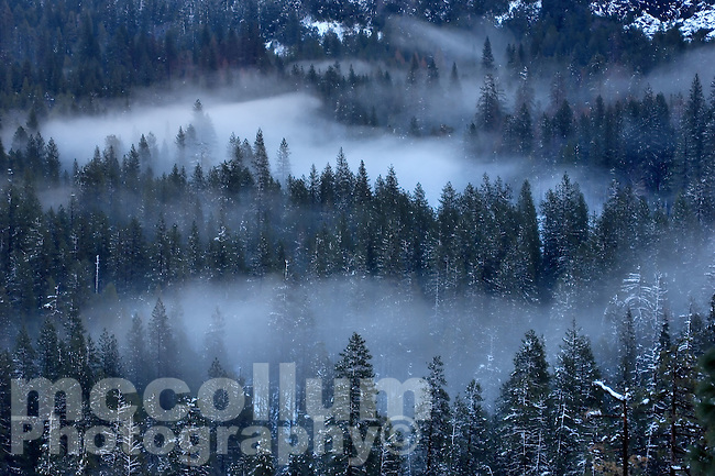 20080205 -- .Michael McCollum.Trees in the mist, valley floor, in spectacular Yosemite National Park.