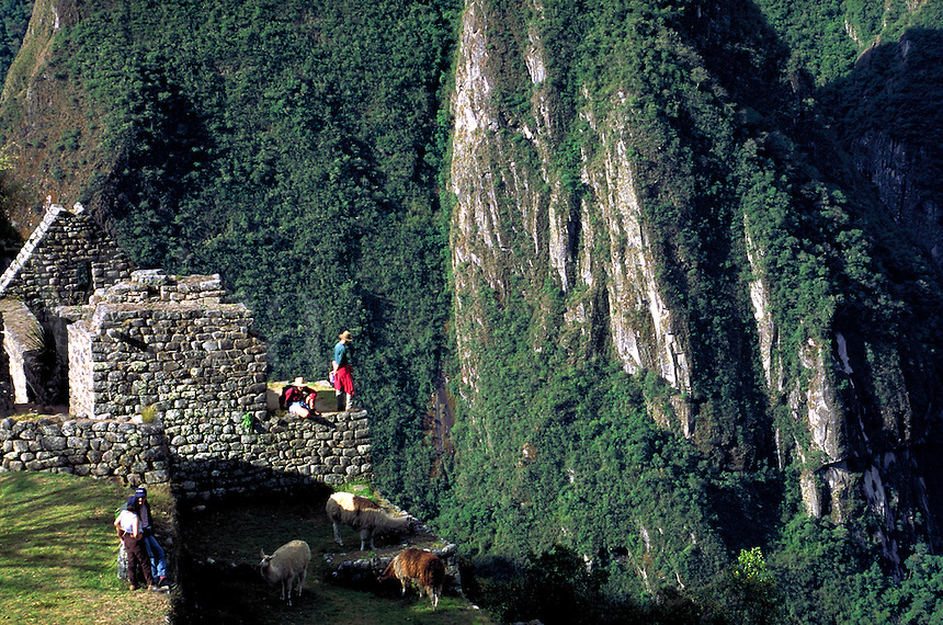 South America ; travel ; Inca ; ruins ; tourist ; llamas. Machu Picchu, Peru.