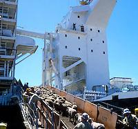 Sheep being loaded on board a transport ship, destination middle east. Brisbane, Australia 1980.