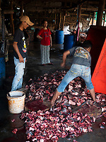 Chopping up the fish, the fish head is then used for crocodile feed in Crocodile farms. The fish is from the Tonle Sap Lake and Mekong River, fish processing near Battambang, Cambodia.