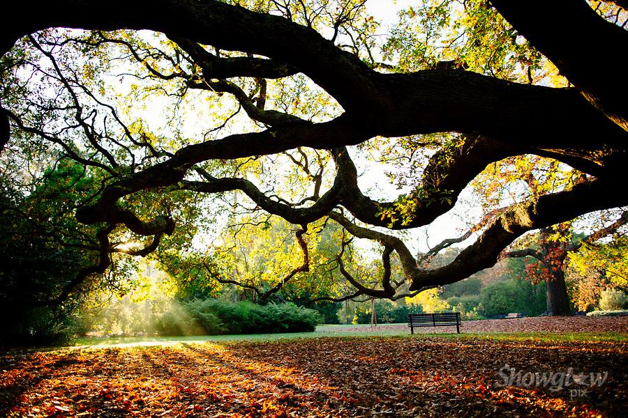 Image Ref: M305<br /> Location: Royal Botanical Gardens, Melbourne<br /> Date: 10.06.17