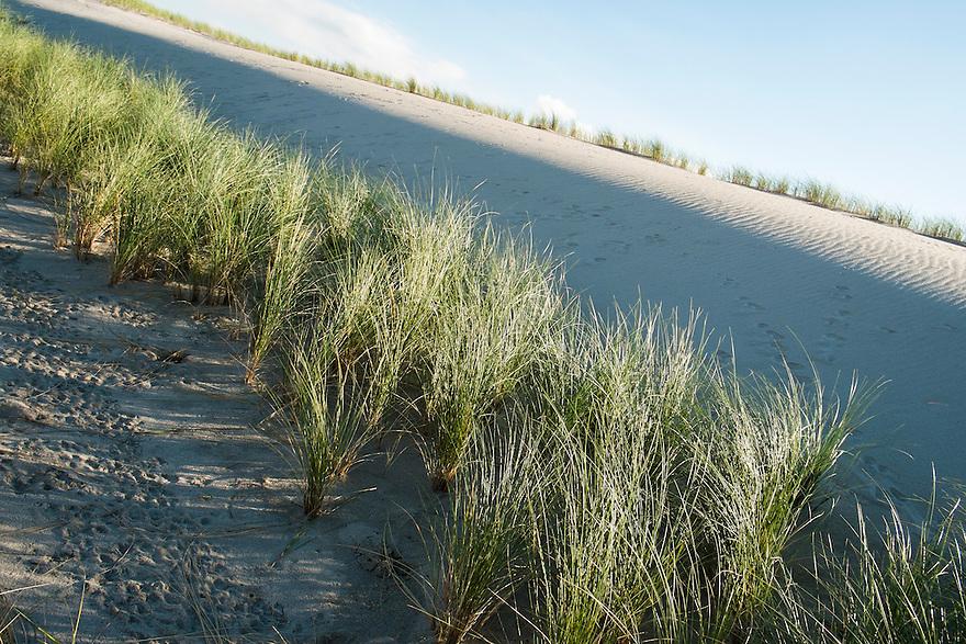 Nederland, Rotterdam, 7 okt 2013<br /> Tweede Maasvlakte. Nieuwe duinen met aangeplante schermen en helmgras om het verwaaien van het zand tegen te gaan. <br /> <br /> Foto(c): Michiel Wijnbergh