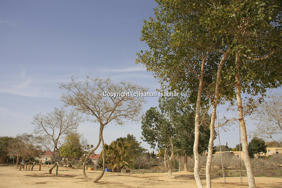 Israel, Negev. The tree garden of Arborsculptor Aharon Naveh in Kibbutz Revivim