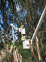 2017 FPL Hurricane Irma restoration in West Palm Beach, Fla. on Sept. 12, 2017.