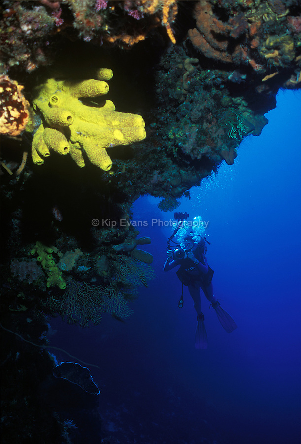 A scuba diver takes pictures of a tropical coral reef.