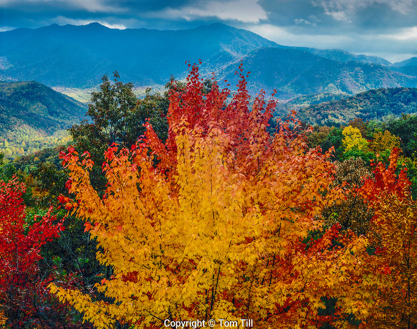 Great Smoky Mountains, Tennessee, Mount Le Conte October, Appalachian Mountains