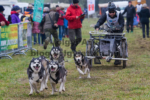 Participant and his dogs compete during the FISTC Dog Cart European Championships in Venek (about 136 km Norht-West of capital city Budapest), Hungary on November 22, 2014. ATTILA VOLGYI