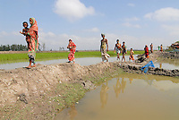 "Asien Suedasien Bangladesh , Dorf Vacotmari , Reisanbau vs. Shrimp farming  dadurch Versalzung der Felder  -  Klimawandel Ueberschwemmung Landwirtschaft xagndaz | .South asia Bangladesh , shrimp farming vs. rice farming , salinization of fields - agriculture .| [ copyright (c) Joerg Boethling / agenda , Veroeffentlichung nur gegen Honorar und Belegexemplar an / publication only with royalties and copy to:  agenda PG   Rothestr. 66   Germany D-22765 Hamburg   ph. ++49 40 391 907 14   e-mail: boethling@agenda-fototext.de   www.agenda-fototext.de   Bank: Hamburger Sparkasse  BLZ 200 505 50  Kto. 1281 120 178   IBAN: DE96 2005 0550 1281 1201 78   BIC: ""HASPDEHH"" ,  WEITERE MOTIVE ZU DIESEM THEMA SIND VORHANDEN!! MORE PICTURES ON THIS SUBJECT AVAILABLE!!  ] [#0,26,121#]"