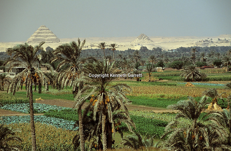 Egypt's Old Kingdom; Agricultural science with Step pyramid of Djoser, designed by vizier and architect Imhotep, in background; Saqqara; Egypt