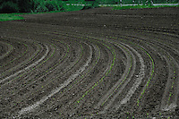 Green shoots of new crops growing between tractor trails of recently ploughed field. Aschaffenburg countryside, Bavaria, Germany.