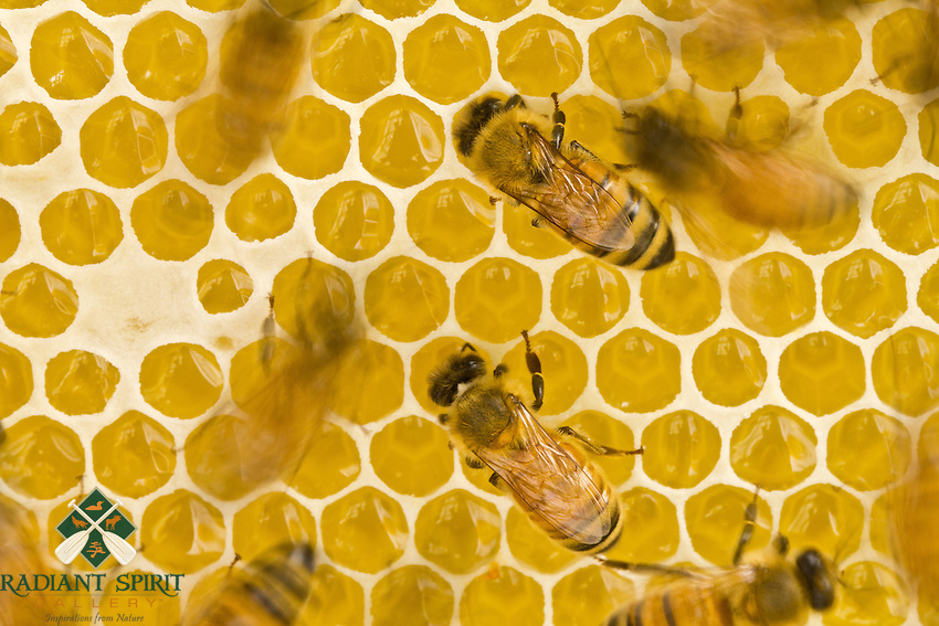 &quot;The Art of Making Honey&quot;<br /> <br /> Some worker bees are abuzz in the honey super, while others remain focused on the task at hand.