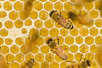 &quot;The Art of Making Honey&quot;<br />