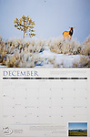 Nelson Kenter photo of a cow elk in winter in a sagebrush field used on a calender for the Rocky Mountain Elk Foundation