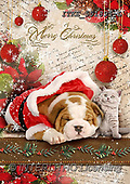 Isabella, CHRISTMAS ANIMALS, WEIHNACHTEN TIERE, NAVIDAD ANIMALES, realistic animals, realistische Tiere, animales re, paintings+++++,ITKE551895-L,#XA#