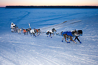 Mike Williams Jr. runs up the bank of the Yukon River into the Kaltag checkpoint at daybreak in -40 degrees below zero during the 2010 Iditarod