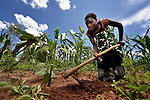 Irene Botha farms corn in Chigumba, a village in northern Malawi which has been hit hard by drought and hunger. The ACT Alliance is helping residents of this community discover new ways to grow more food, thus achieving food security for their families.