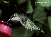 HU11-046x  Ruby-throated Hummingbird - female hovering while drinking sugar water at feeder -  Archilochus colubris