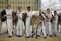 left to right- Zach Steensma, Travis Lenssen, Pedro Chavez, Luke Wolfisberg, Aric VanderHaak, and Alex Kayser during the Novice Fitting and Showing of Jersey calves at the NW Washington Fair. August 18, 2009 PHOTOS BY MERYL SCHENKER            ....schenker IMG_0519.JPG