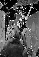 "Actress Valerie Perrine performs with elephant at the ""Circus of the Stars,"" (CBS Special), Santa Monica Civic Auditorium, November, 1976. Photo by John G. Zimmerman"