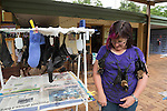 Wildlife carer volunteer Louise O'Brien takes care of fruit bat babies (or bubs) in Tolga bat Hospital. Spectacled flying fox (Pteropus conspicillatus)