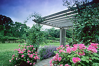 Blooming Carefree Wonder Roses at a garden trellis, Strawbridge Lake, Moorestown, New Jersey