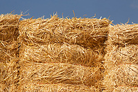 Bales of barley straw<br /> &copy;Tim Scrivener Photographer 07850 303986<br />      ....Covering Agriculture In The UK....