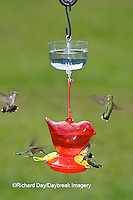 01162-12511 Ruby-throated Hummingbirds (Archilochus colubris) at feeder with ant guard,  Marion Co.  IL