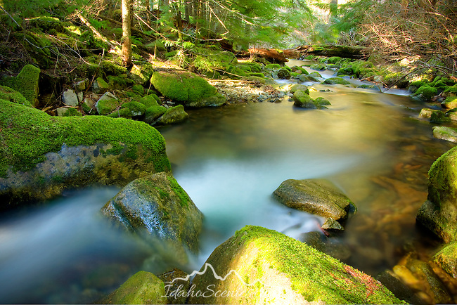 Idaho, North, Coeur d'Alene. Beauty Creek flows through moss covered boulders in a lush forest setting before joining Beauty Bay of Lake Couer d'Alene.
