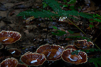 "Fungus at Phnom Kulen, ""Elephant Park"" and Bat Caves, Cambodia"
