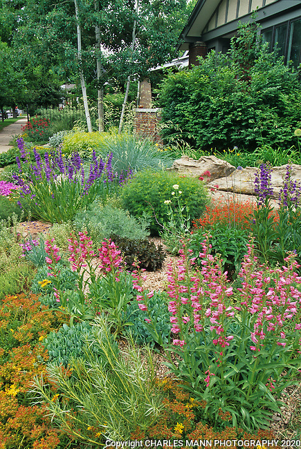 In the southwest and Rocky Mountain areas, water wise landscape designs come in all colors and shapes and incorporate a wide range of both nativespecies as well as appropriate adapted plants, ranging from succulents and cacti to endemic penstemons and traditional perennials.  The urban garden of Arun Das in Denver shines with penstemons and sedums.i